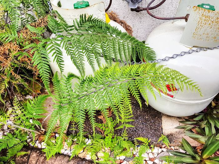 Ferns Gas Bottles Outdoors No People Day High Angle View Lifestyles Architecture Plants growth Garden Photography Built Structure The Week On EyeEm