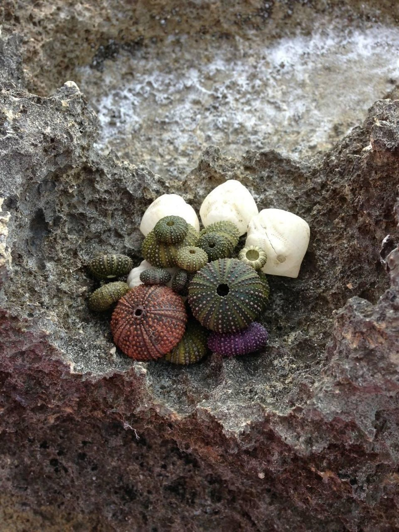 Sea Urchin Shells Sea Shells Summertime Nature Colors Variety