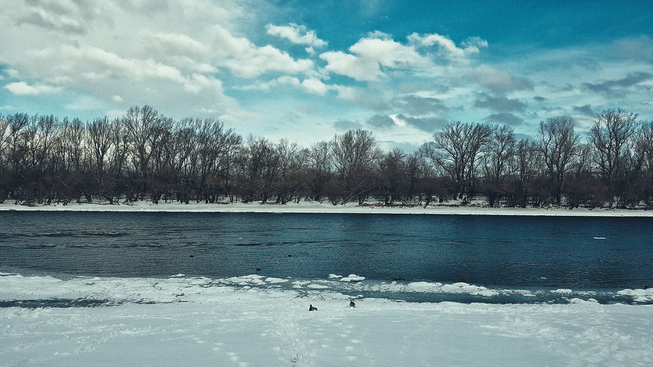 cold temperature, winter, nature, snow, animals in the wild, animal themes, sky, weather, cloud - sky, tree, bird, beauty in nature, scenics, animal wildlife, water, tranquility, no people, lake, one animal, outdoors, day, tranquil scene, frozen, swan, bare tree, mammal
