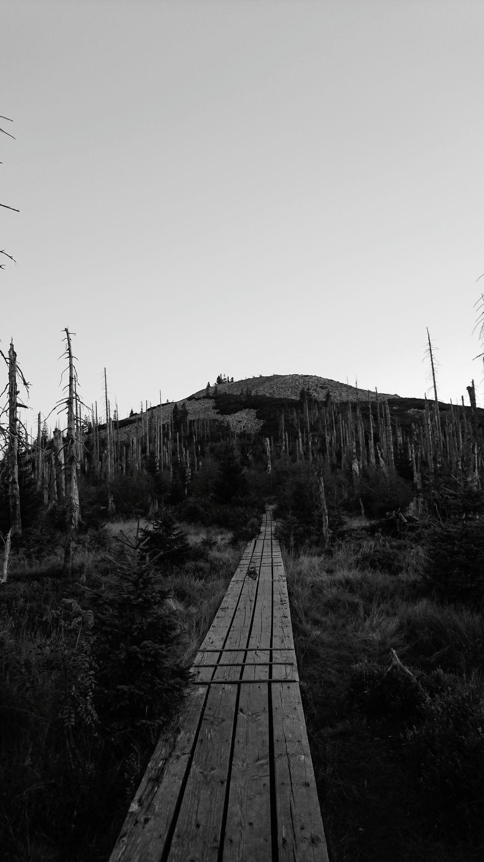 Lusen  Wald Bäume Und Himmel