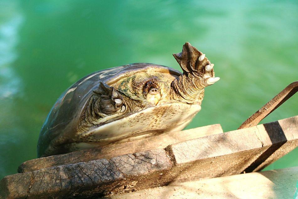 Always Be Cozy Nandankanan Bhubaneswar,india Bhubaneswar Tortoise Tortoise! My Year My View waiting game Adapted To The City Uniqueness ミーノー!! TCPM