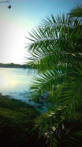 Showcase: December Beautiful Palm Trees Paradise Lake Nature_collection Outdoors Simplyscenic Simplyscenic_photography