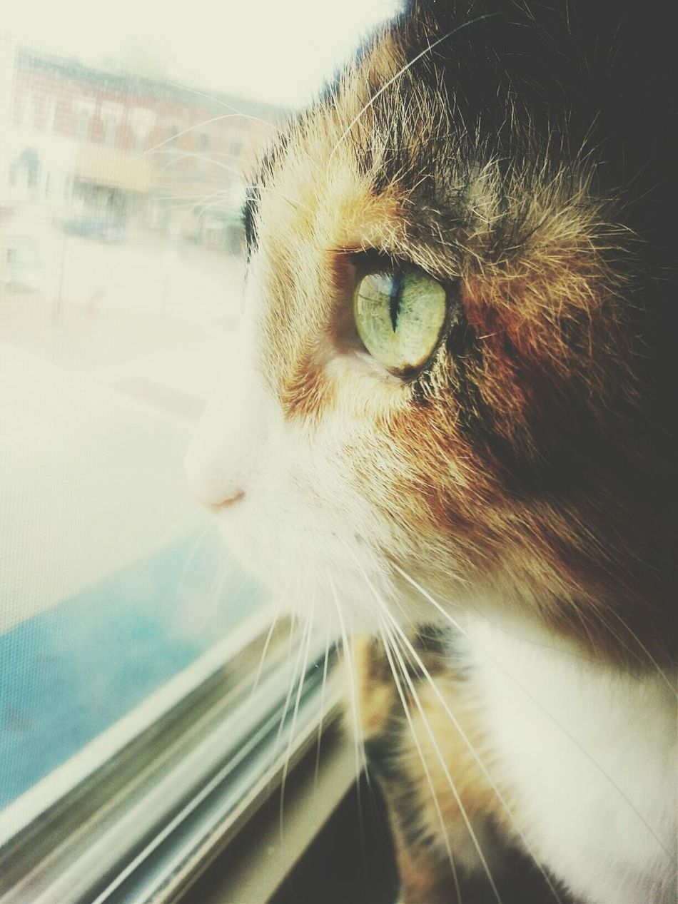 My cat loves the window. Pets Cats Photography Catstagram