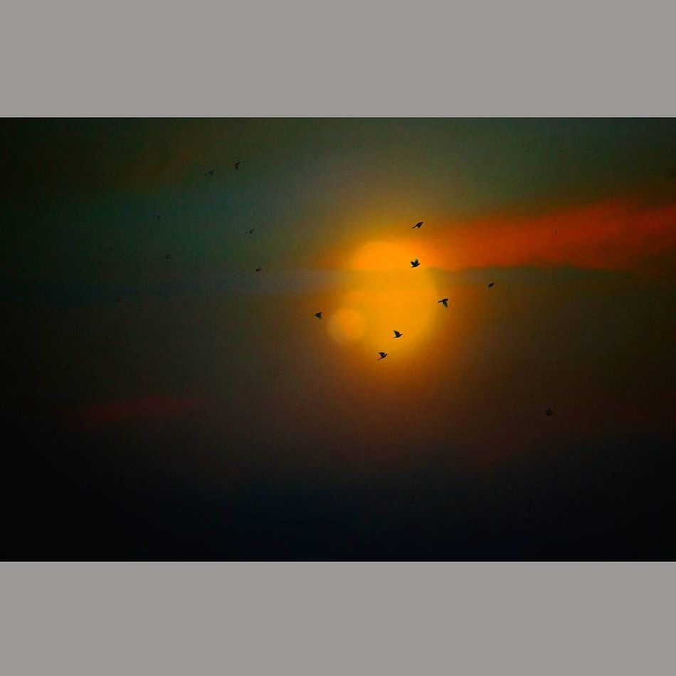 Nature Sunset Bird No People Scenics Sky Flock Of Birds Edited Science Fiction Dramatic Sky Dream Cosmos Lucid Occult Flying Beauty In Nature Animal Themes Science Outdoors Galaxy Day
