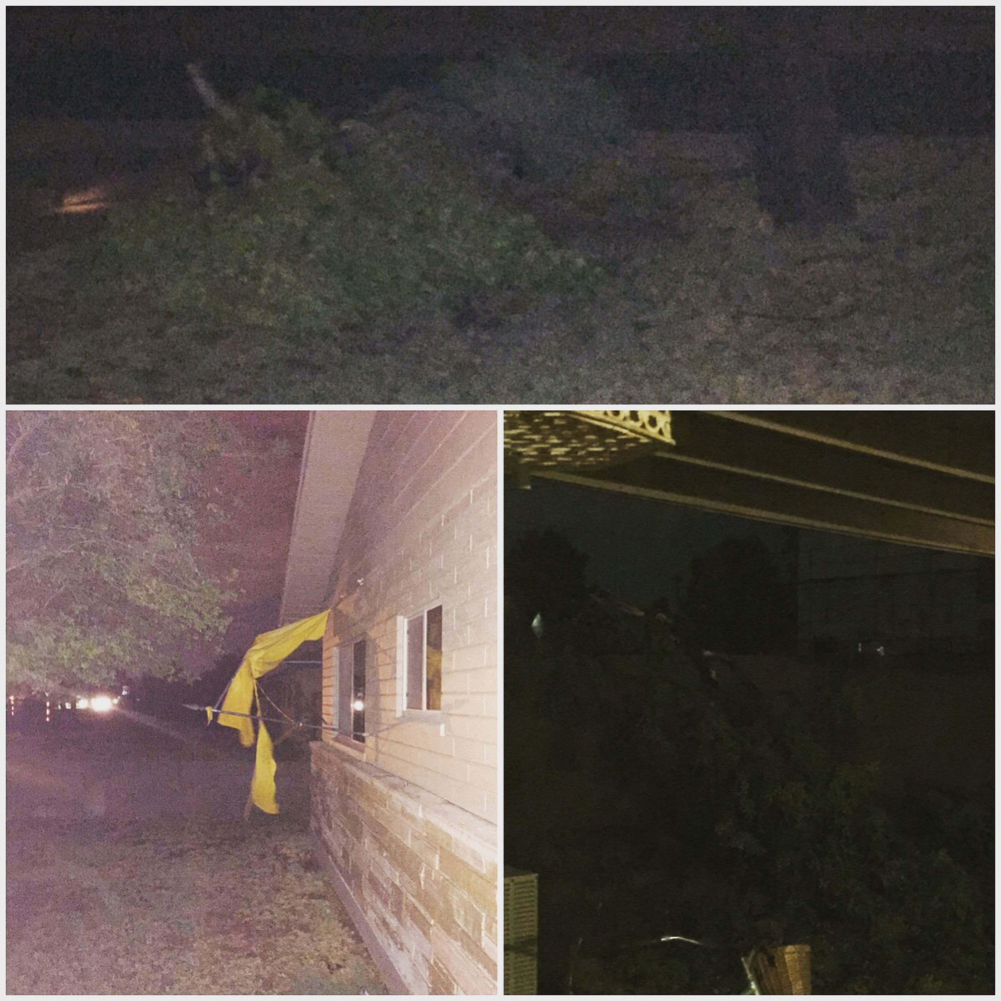 AZ Monsoon Season Tore Up My House Rain So Hard Tree Down