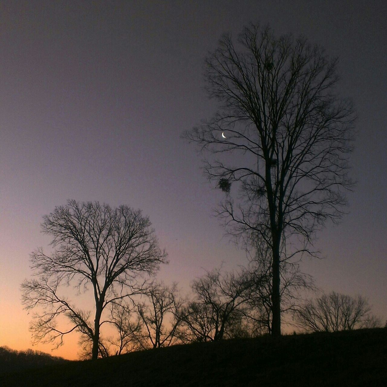 tree, bare tree, silhouette, branch, nature, beauty in nature, scenics, landscape, tranquility, tree trunk, tranquil scene, lone, sunset, sky, outdoors, no people, moon, night