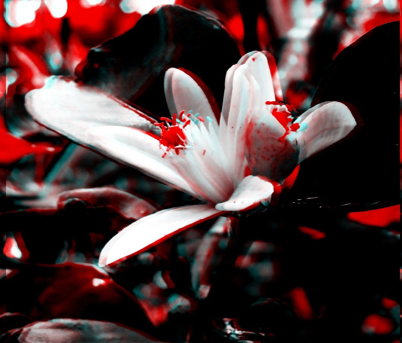 Life goes on!! (Collection) 3D Art 3d Collection 3D Composition 3D Effect 3D Photo 3Dart Beauty In Nature Black Black & White Black And White Blakck And White Blue Flower Flower Head Fragility Freshness Leaves Nature No People Outdoors Outdoos Petal Red Red White