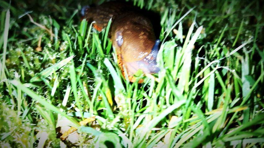 Slugs Love Eyeem Slugs Rule. Slug Life Slug At Night.