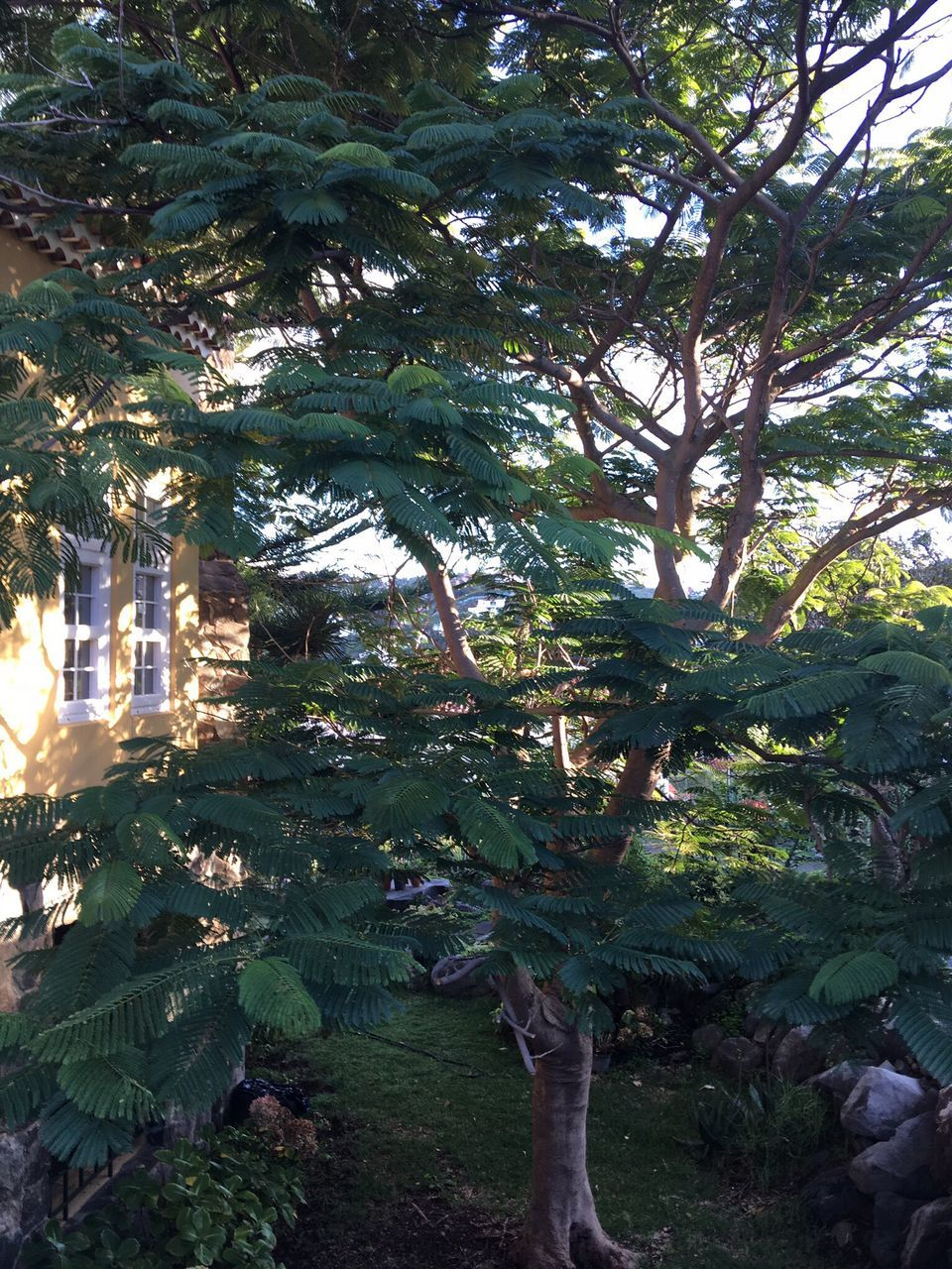 tree, growth, no people, day, nature, green color, outdoors, architecture, beauty in nature