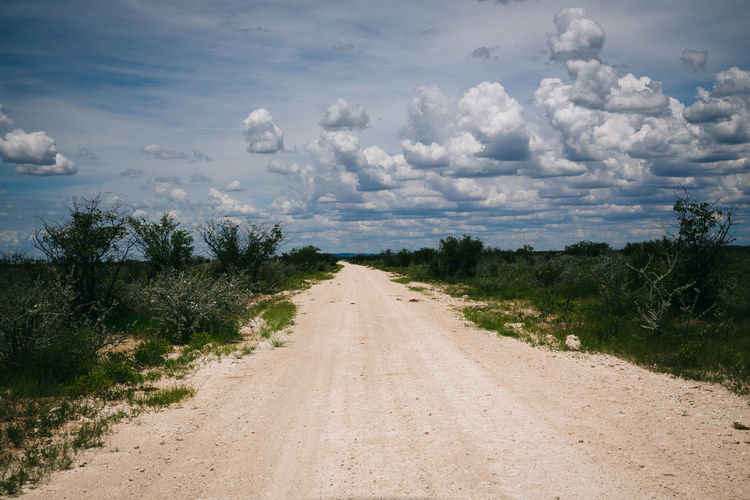 Road Trip Thru Namibia Africa African Beauty In Nature Country Road Diminishing Perspective Driving Empty Empty Road Freedom Grass Landscape Open Plant Road Road Road Trip Roadtrip Rural Scene Scenics Sky The Way Forward On The Way Travel Vanishing Point Wildlife
