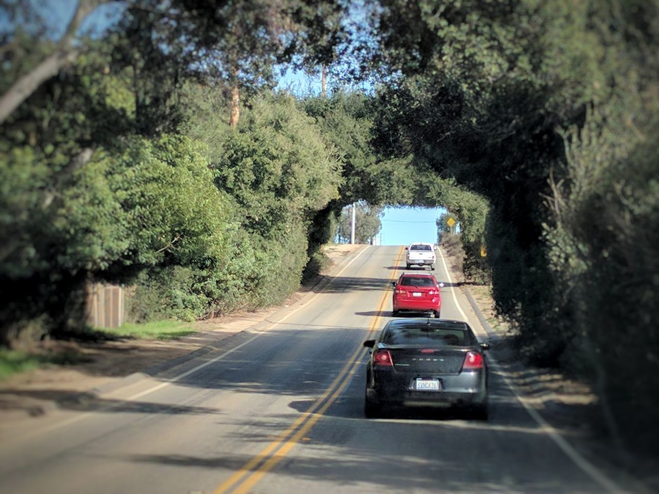 revisiting the tree tunnel Transportation Outdoors The Way Forward Nature Road On The Road In A Car Outdoor Photography Taking Photos EyeEm Gallery Rural Scene Country RoadGrowth Side Of The Road EyeEm Nature Lover Trees And Sky Trees Afternoon Blue Sky Vehicles Traffic