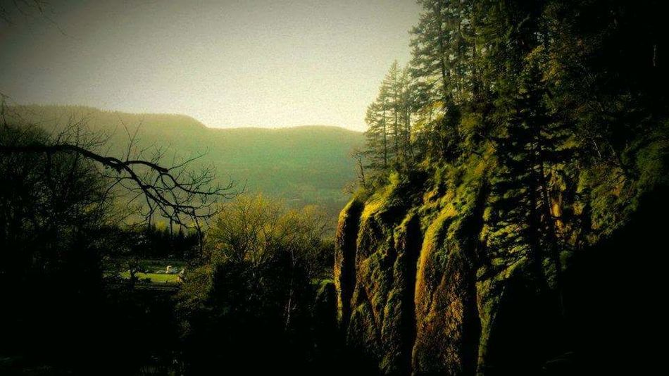 Portland, OR Multnomah Falls  Green Trees Mossy Tree Beauty In Nature Sunset Forest No People Tranquility Nature Tree Outdoors