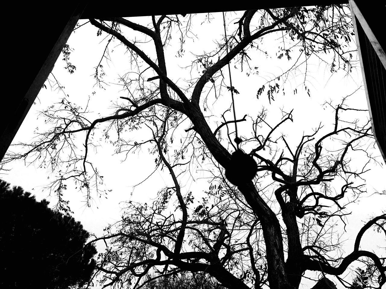 Indoors  Black And White Blackandwhite Photography Black & White Blackandwhite Tree Low Angle View Branch Sky No People Nature Bare Tree Silhouette Growth Day Outdoors Beauty In Nature Perching Rome Italy December Morning Morning Light Morning Sky Monochrome Nature