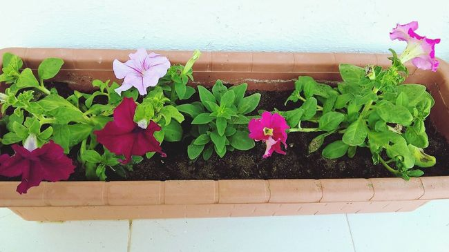 Garden Flowers Btola Picture Enjoying Life