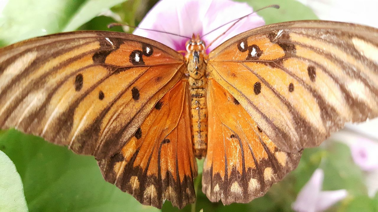 Wildlife Animal Themes Animals In The Wild Insect One Animal Butterfly - Insect Close-up Natural Pattern Butterfly Animal Wing Fragility Beauty In Nature Flower Pollination Symbiotic Relationship Nature Animal Markings Focus On Foreground Arthropod Animal Behavior