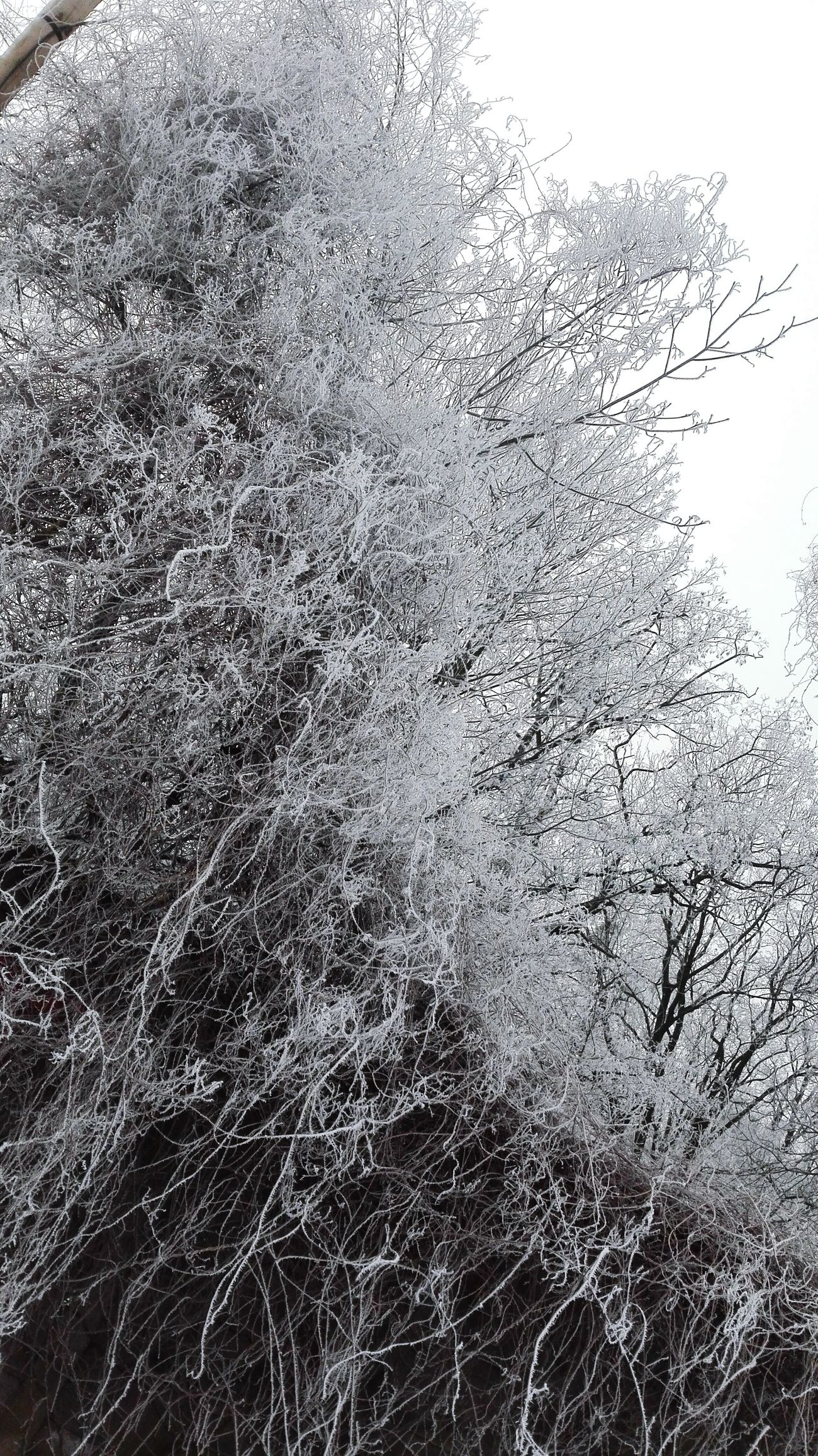 Frosted Glass No People Beauty In Nature Snow Nature Day Cold Temperature Winter Sky