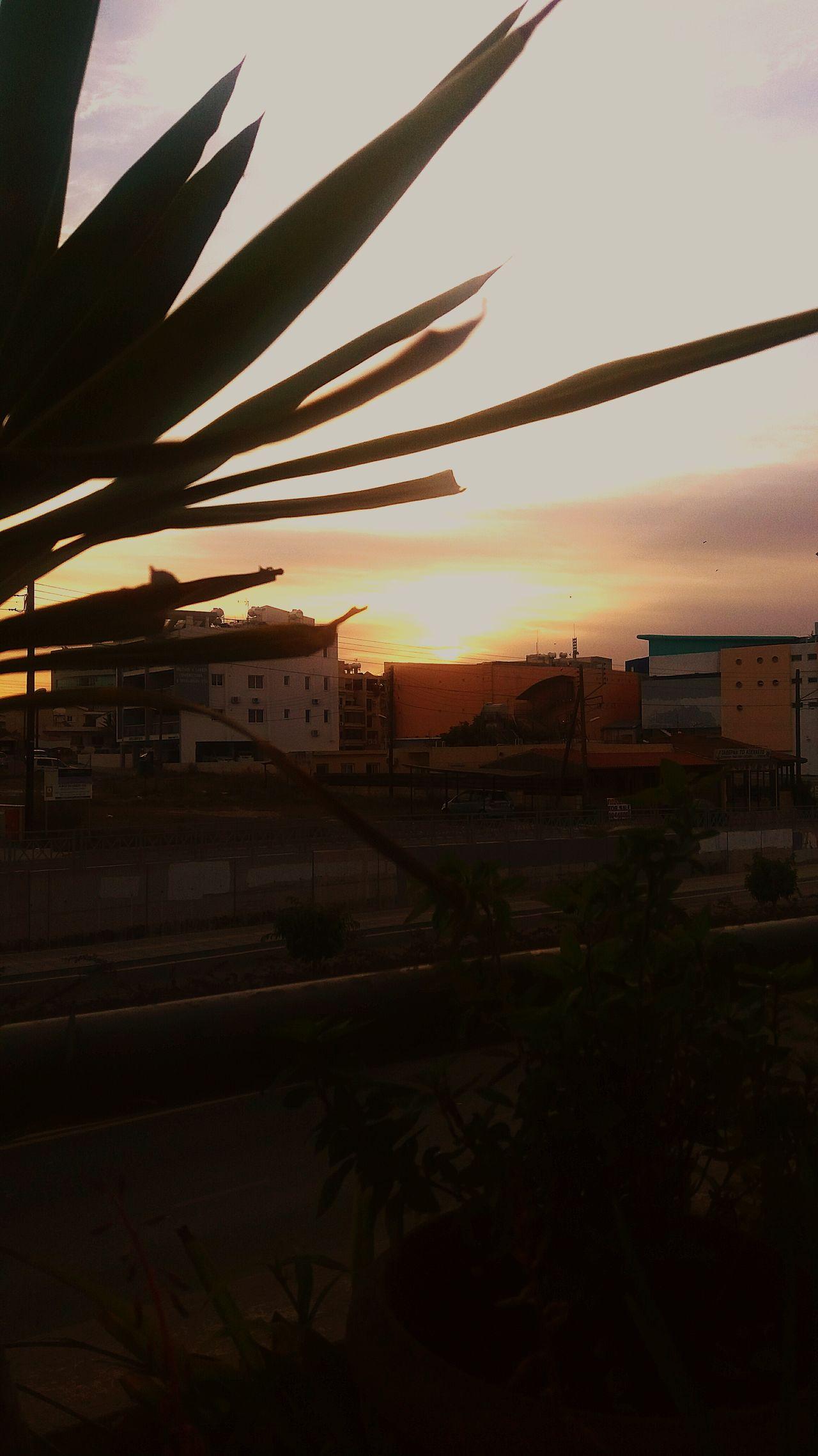 Goodmorning 🌇 Sunrise Architecture Tree Day Sky Sun Sunlight And Shadow Sunrise_sunsets_aroundworld Goodvibes Good Morning World! Sundaymorning Sunday Nature_perfection