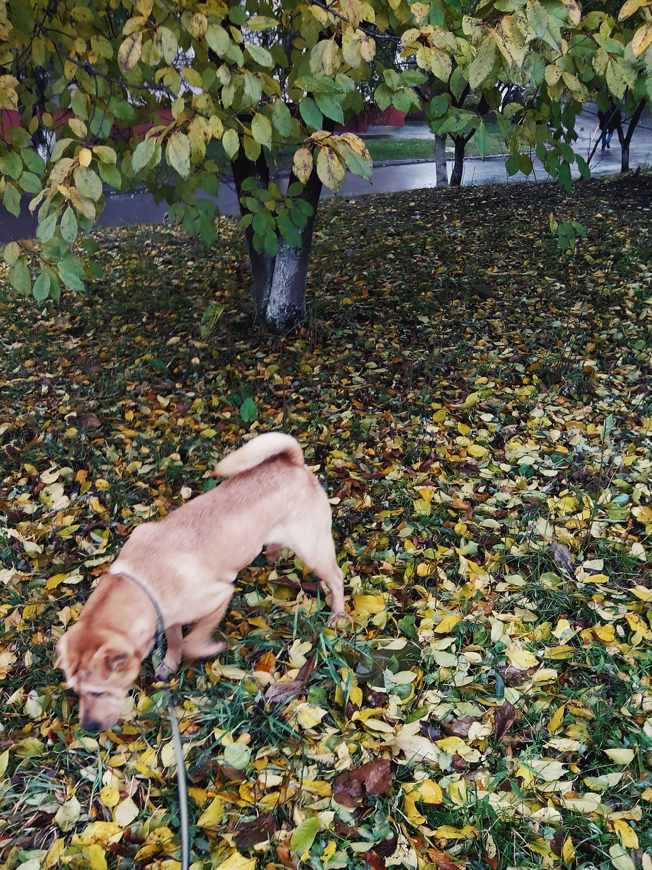 High Angle View Nature Outdoors Growth Grass Freshness Animal Themes Close-up Low Section Beauty In Nature Leaf Day Lifestyles Scenics Dog Animal Behavior Dog Love Pet Photography  Pet Animals Animal Photography Animal Representation Fall Fall Beauty Autumn