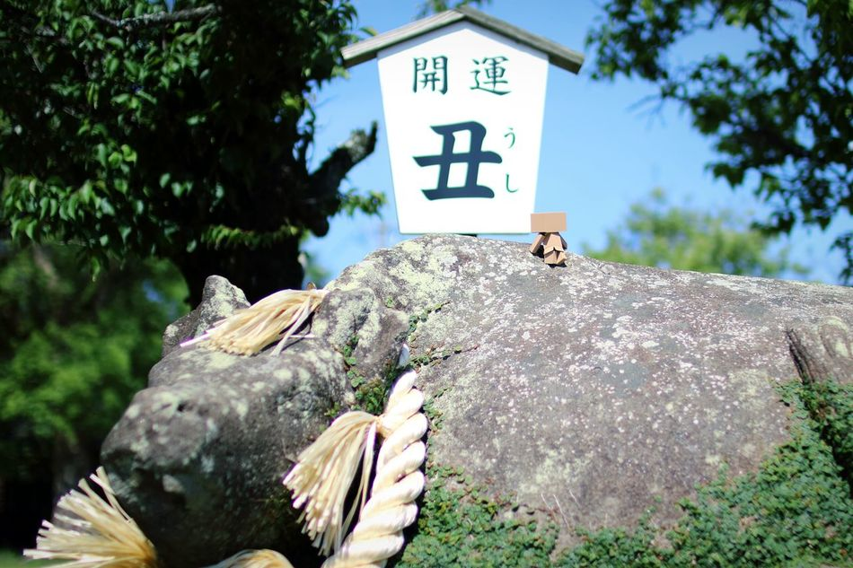 丑さん。 Danbo EyeEm Gallery Cheese! Shallow Focus Japanese Shrine Hello World Cow Sky And Trees
