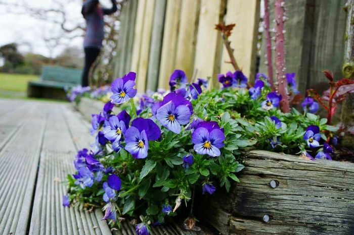 Flowersgarden Flowers Travel Travel Photography Violet Flowers