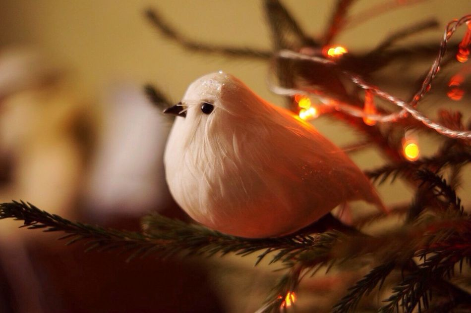 Beautiful stock photos of christmas tree, Animal Representation, Artificial, Arts Culture And Entertainment, Bird