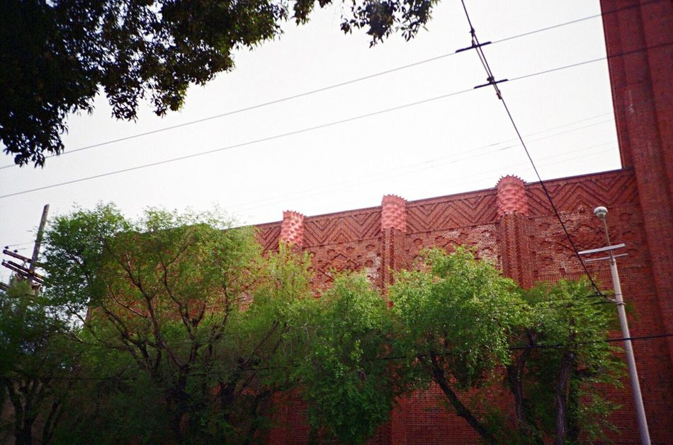 Tree Architecture Built Structure Building Exterior No People Koduckgirl Film LCA+ F2/400 Low Angle View
