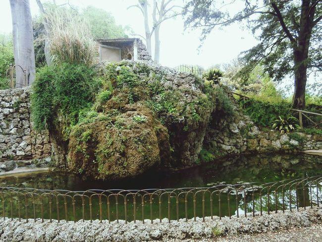 Biutifull Photo Nature Tranquility Giorno Love To Take Photos ❤ Bellezza Beauty In Nature Parco Cita Calma