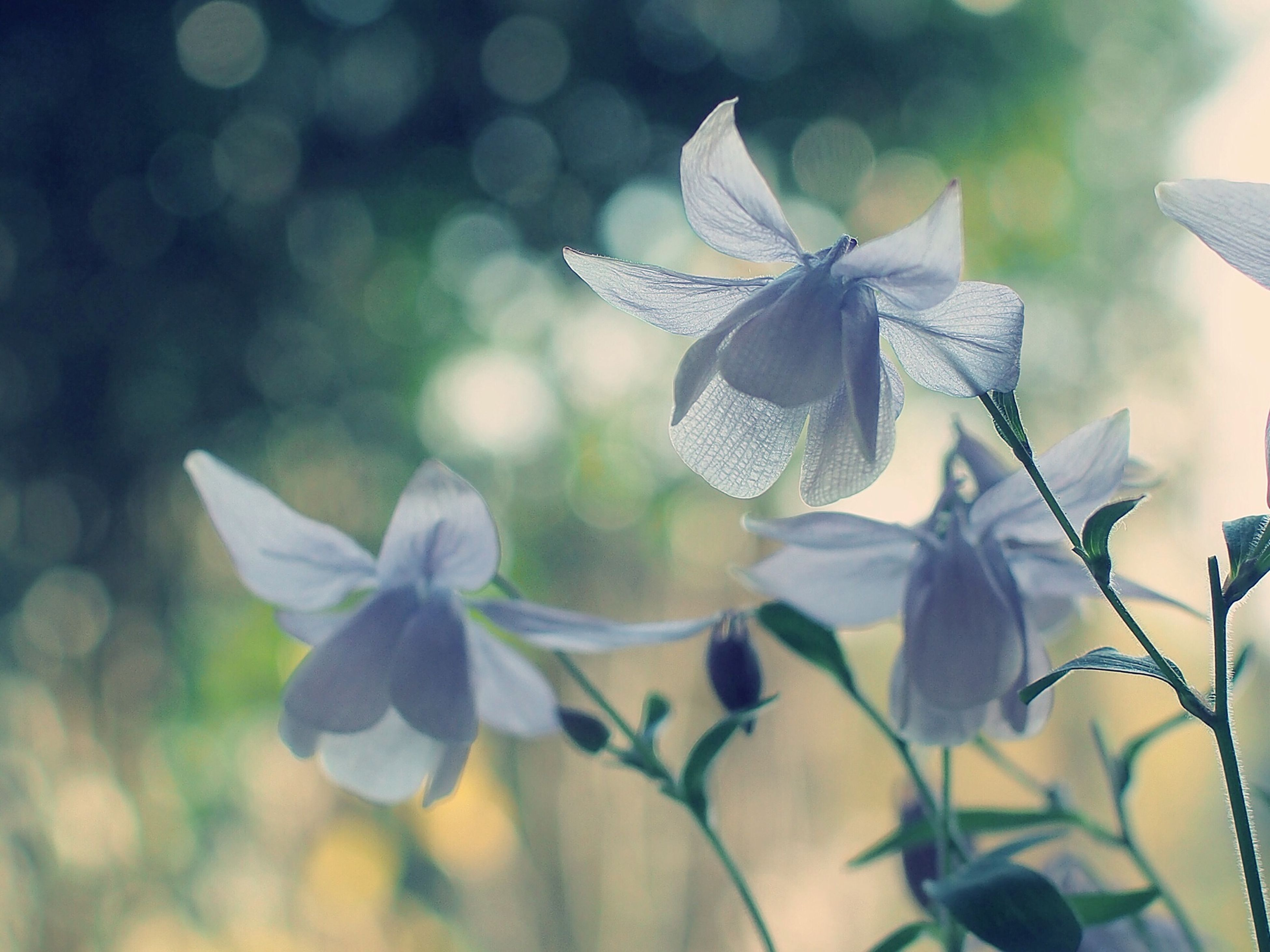 flower, fragility, petal, freshness, focus on foreground, growth, close-up, flower head, leaf, plant, beauty in nature, nature, blooming, white color, in bloom, day, stem, outdoors, no people, pollen