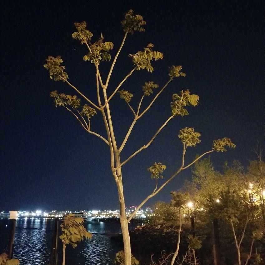 I call it a hairless tree Nature Galaxy S8+ Lowlightphotography Steadyshot