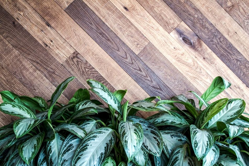 Leaf No People Day Nature Plant Growth Close-up Backgrounds Beauty In Nature Plants Plants On The Wall Pattern, Texture, Shape And Form Full Frame Wood - Material Textured  Indoors  Wall Wall With Leaves Leaves Wooden Wall Interior Design Interior Decoration Lifestyles Wall - Building Feature