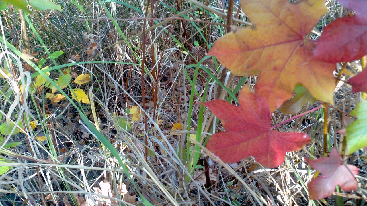 Autumn Beauty In Nature Change Close-up Day Fragility Freshness Fungus Grass Grass Growth Leaf Nature No People Outdoors Plant Plants Red Tranquility Winter