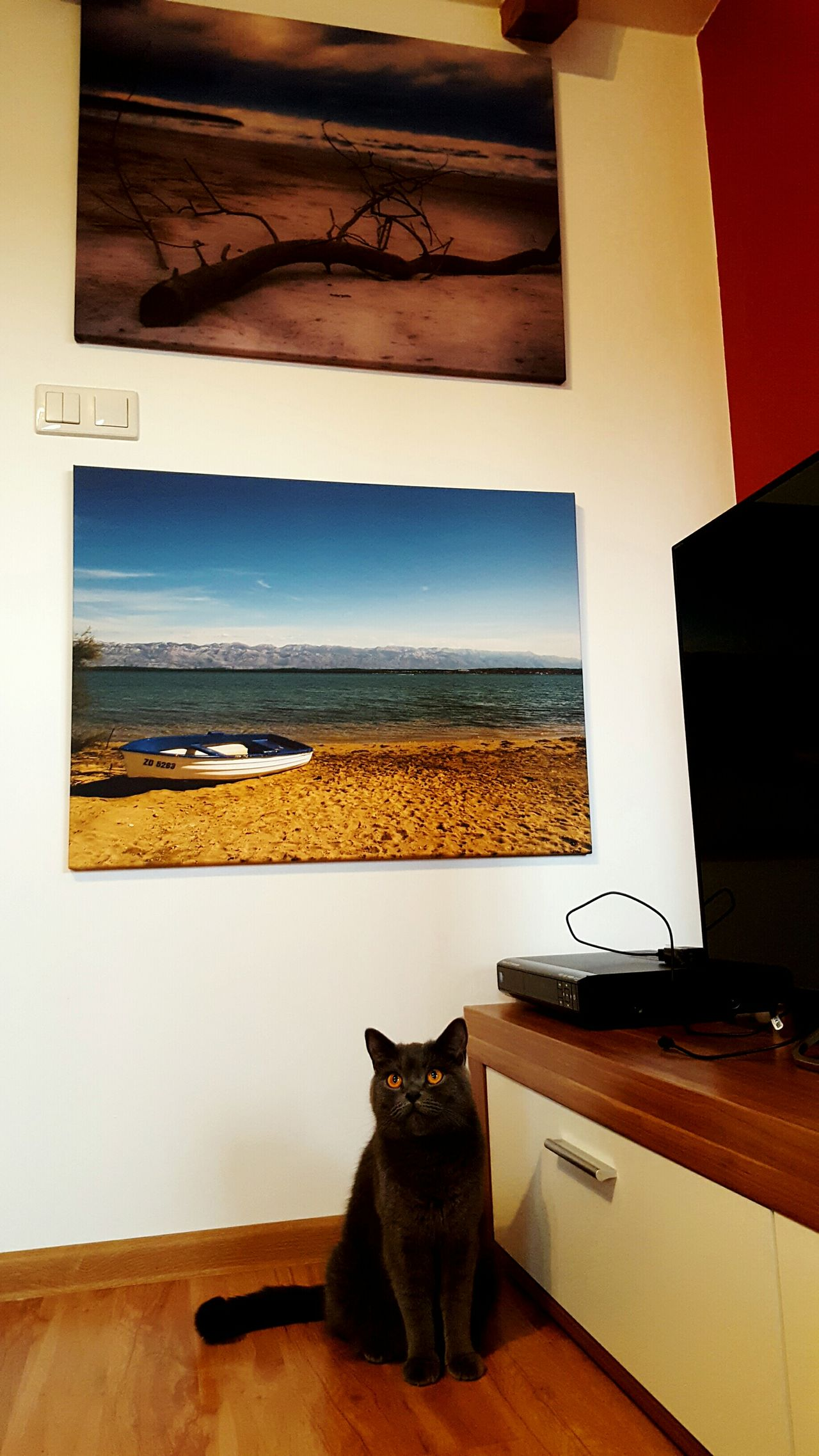 Home Is Where The Art Is Art Design Art Decor Animal Themes Animals EyeEm Nature Lover Relaxing No People Decoration My Cat British Shorthair British Cat Tennessee Home Home Sweet Home Flatmate Watching Watching You Wall Art Wall Interrior Views Trophy Pivotal Ideas Friendship Cat Eyes