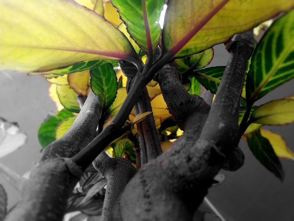 Nature Trees Blackandwhite Photography