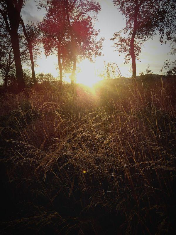 Malhivern Magic Light Sunset Eyem Best Shots Enjoying Life Natural Beauty