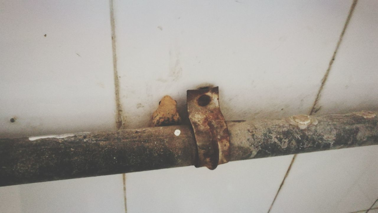 metal, rusty, close-up, no people, door, day, outdoors, hinge, latch, water pipe, architecture