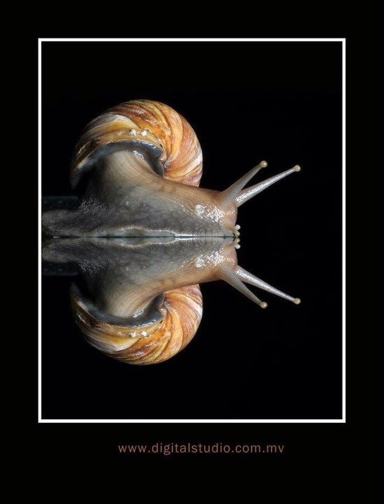 Snail at Portrait Snail