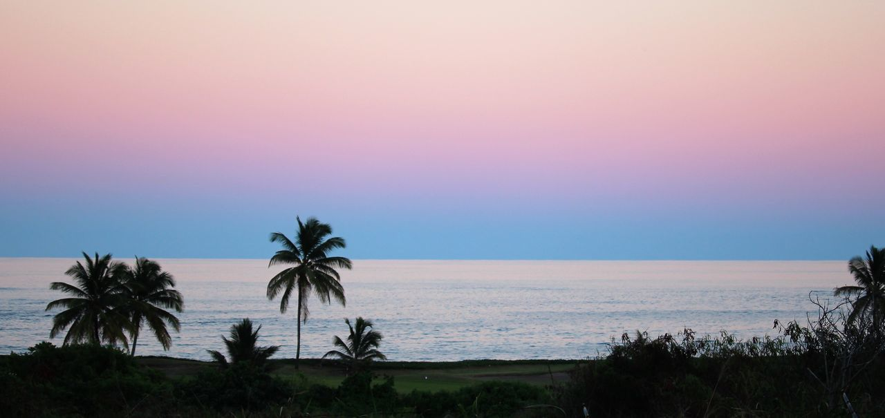 Beach Beauty In Nature Day Dusk Dusk Colours Dusk Sky Horizon Over Water Landscape Nature No People Outdoors Palm Tree Scenics Sea Sky Sunset Sunset_collection Tree