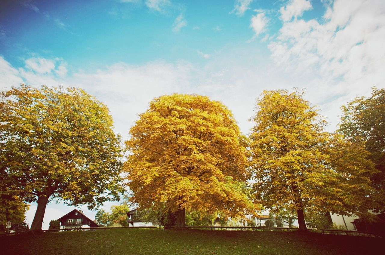 Beautiful stock photos of park, Autumn, Beauty In Nature, Day, No People