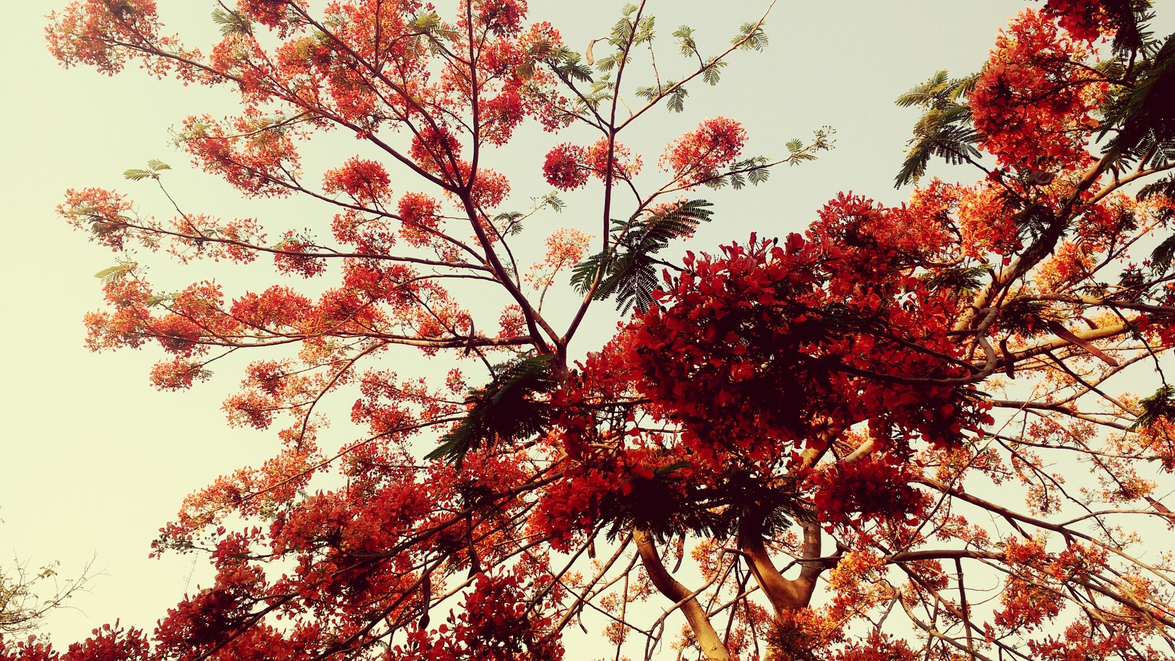 tree, low angle view, growth, nature, branch, beauty in nature, blossom, tranquility, no people, outdoors, flower, sky, day, clear sky