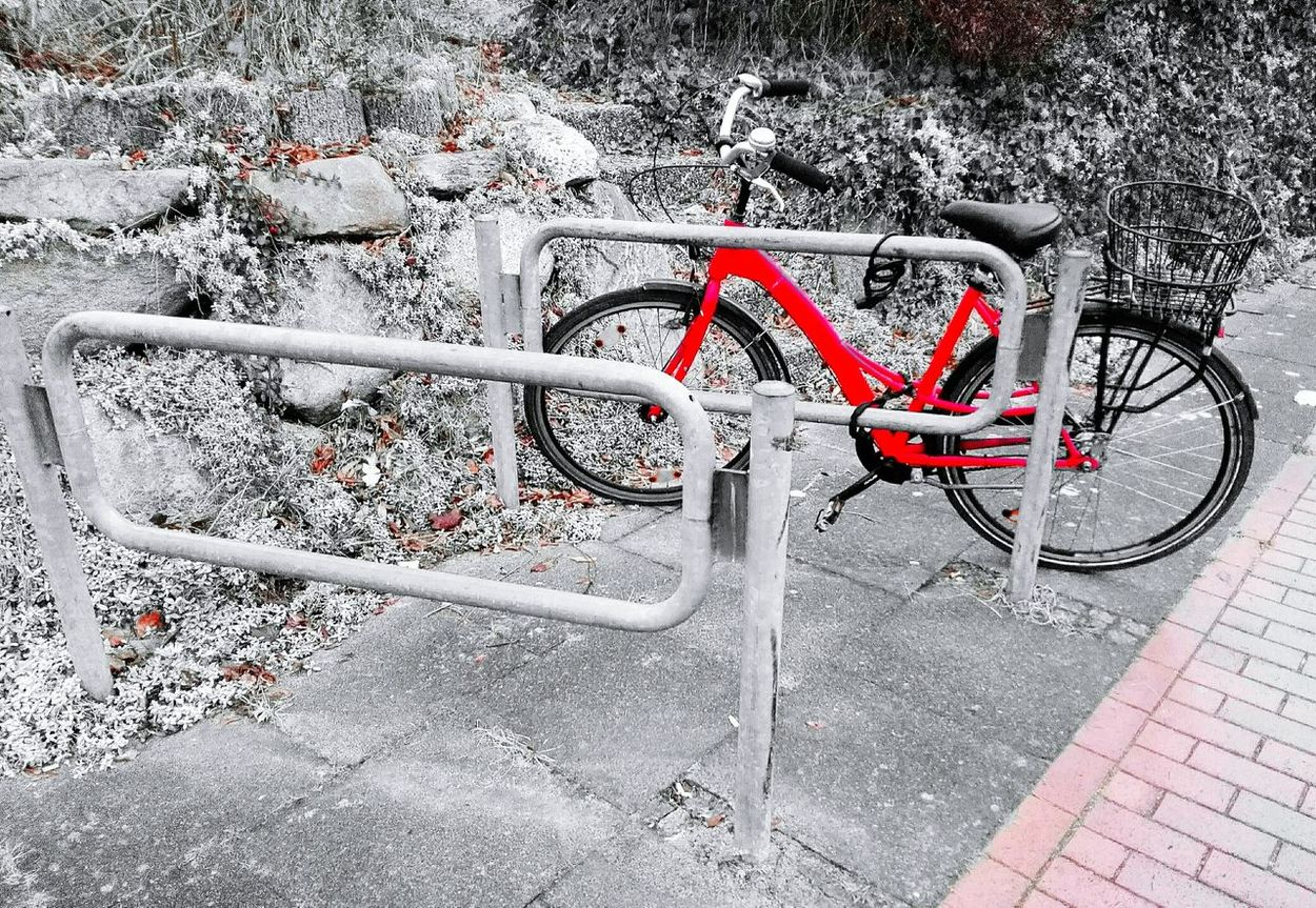 Check This Out a Bycicle alone in Black And White With A Splash Of Colour Red Outdoors No People Day Eye4photography  Bycicle Photography Bycicle Unites Bycicle Lovers Bycicle Art Bycicles Bycicle Parking Fresh On Eyeem