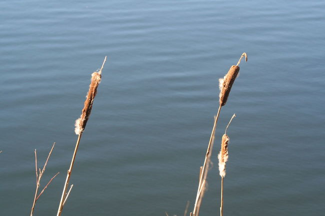 Water Whisbynaturepark Reeds City Escape Nature Reserve