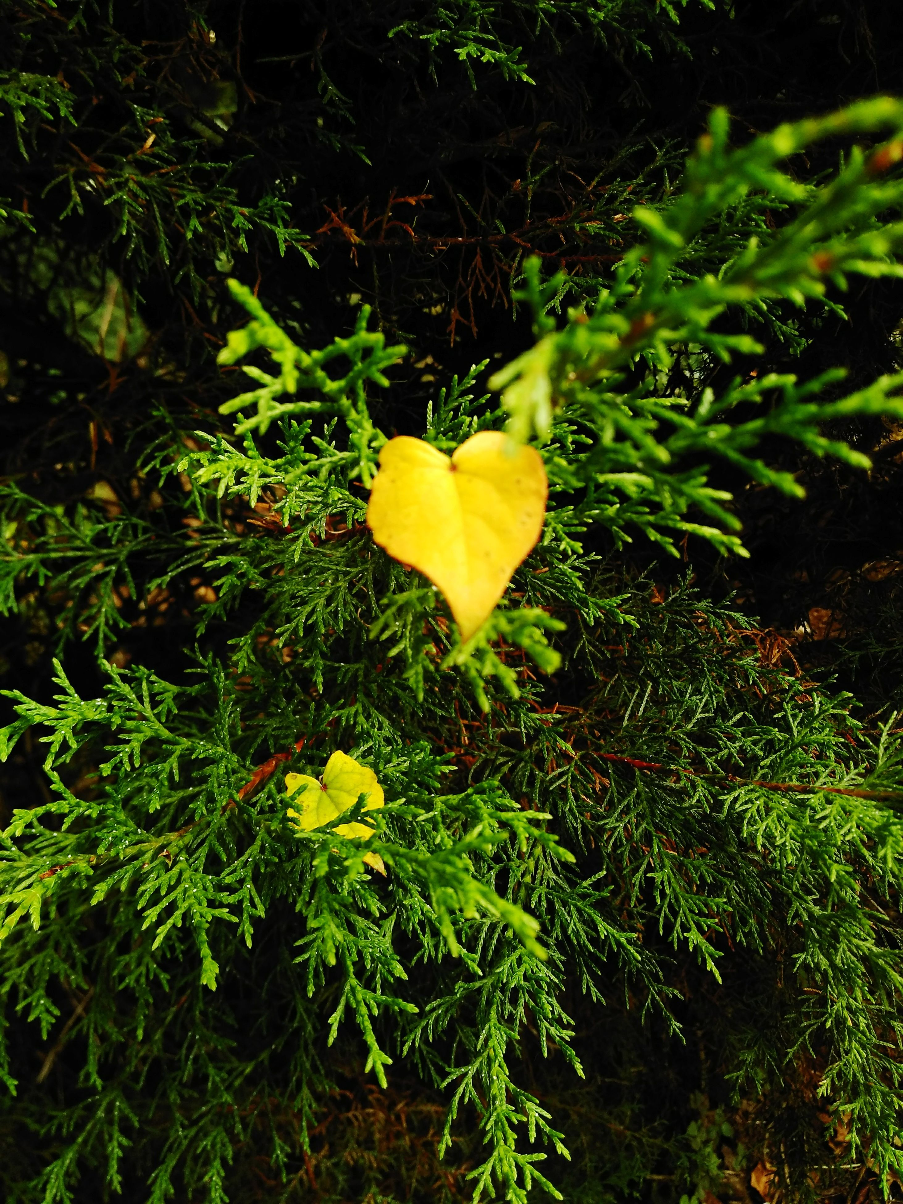yellow, growth, leaf, nature, plant, green color, beauty in nature, flower, no people, fragility, outdoors, freshness, close-up, day, flower head, yellow color