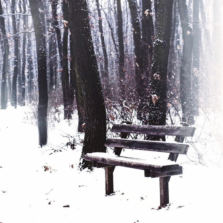 Daydream bench Snow Winter Tree Trunk Cold Temperature Forest Bench Tree Tranquil Scene Tranquility Season  WoodLand Nature Scenics Beauty In Nature Outdoors Day