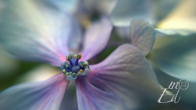 macro flower EyeEm Nature Lover Nature Spring Photography Flowers Taking Photos Nature_collection Flower Macro