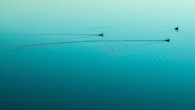 Nature's Diversities LokeeBirds Water Baie De Somme  Lines Shapes Silhouettes