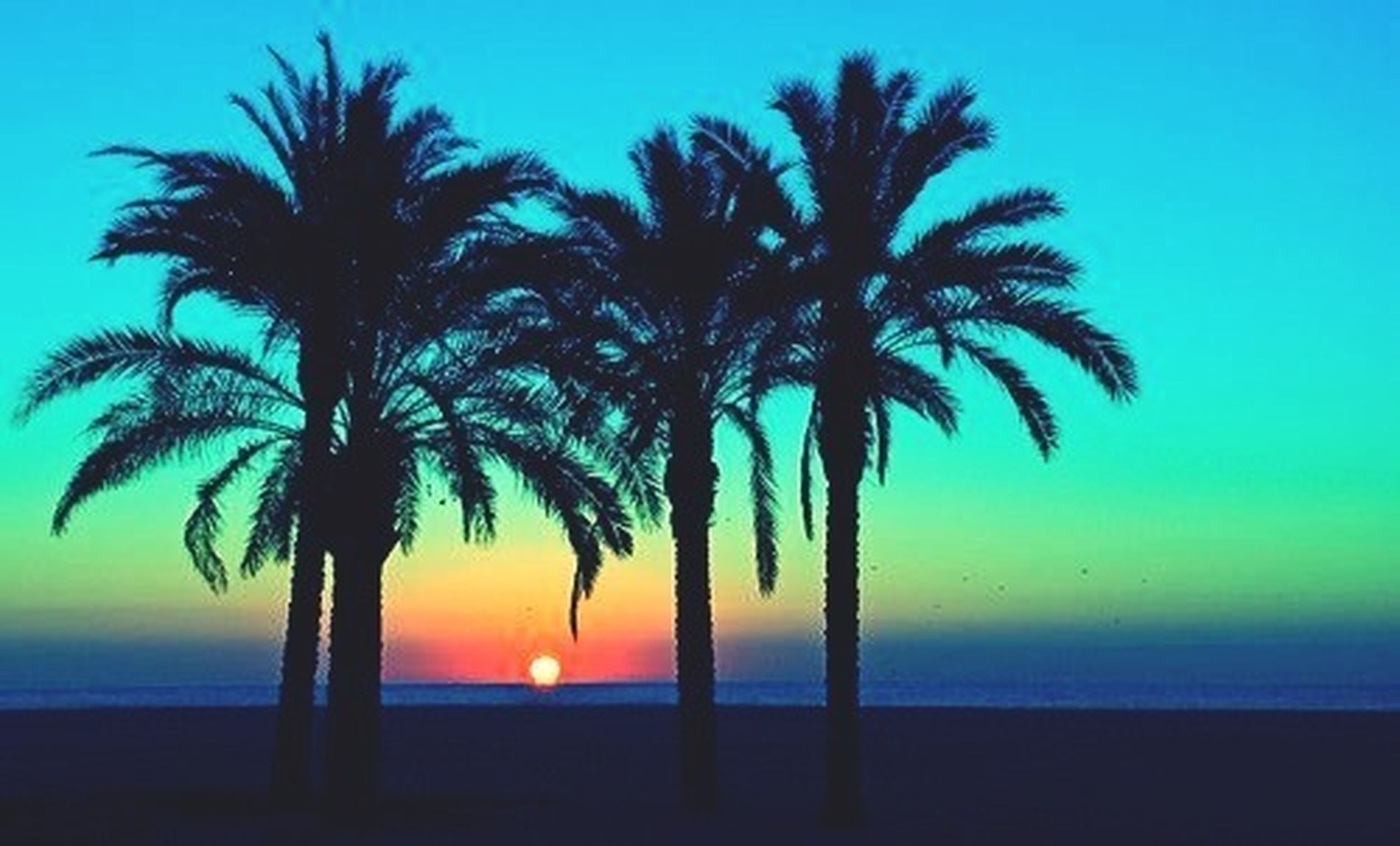 palm tree, sea, horizon over water, sunset, tranquility, tranquil scene, scenics, beauty in nature, silhouette, beach, water, tree, nature, sky, tree trunk, idyllic, shore, blue, clear sky, growth
