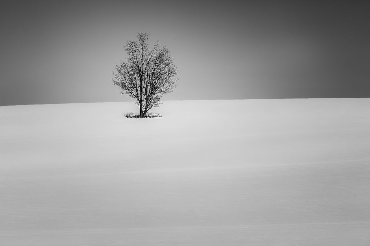 Bare Tree Beauty In Nature Cold Temperature Isolated Landscape Lone Nature No People Outdoors Remote Scenics Single Tree Snow Tranquil Scene Tranquility Tree Winter