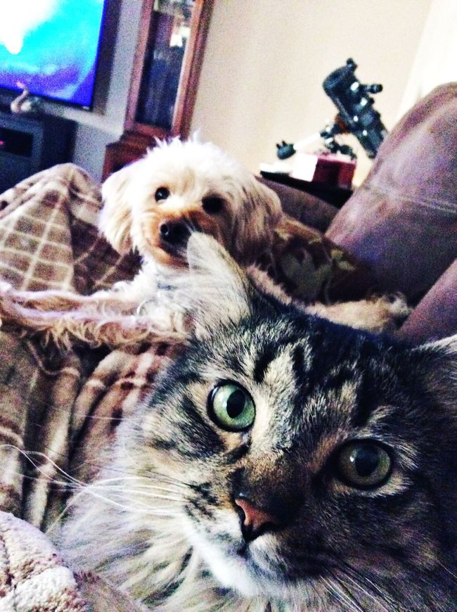 These two helping to hold down the blanket 😊 Hanging Out Animals I Love Animals EyeEm Pets My Puppy Cat