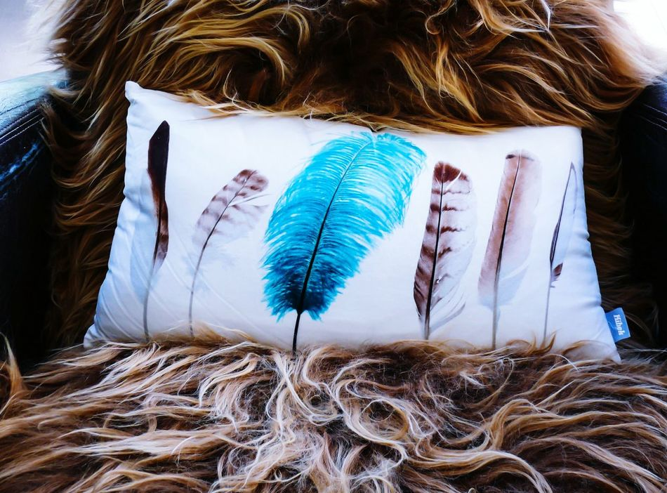 Please sit down Sit Down And Relax Feather  Feather Pillow Testing My New Camera Testing Camera OpenEdit Tadaa Community