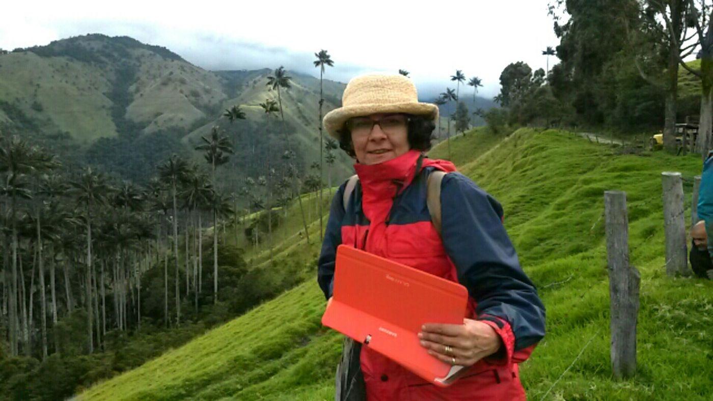 bosques de palma de cera en el Alto del Toche